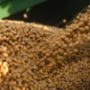 Why are fewer soybeans being sold and exported in 2018?
